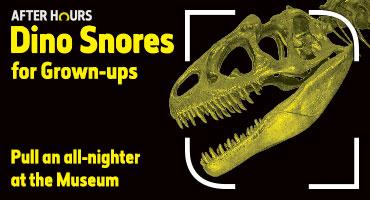 Dino Snores