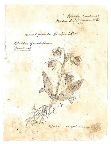 Lettre du Botaniste (2)
